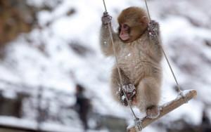 детеныш снежной обезьяны Jigokudani Yaen-koen