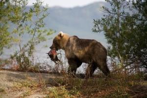 Новые правила охоты 2015 год.
