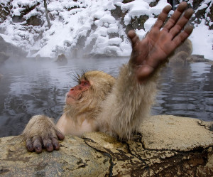 курорт для снежных обезьян