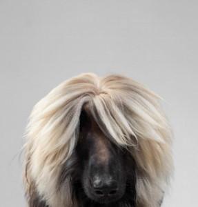 dog__07