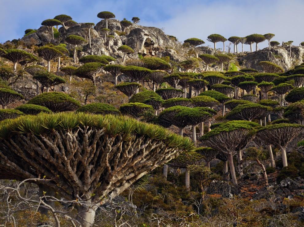 редкие разновидности флоры и фауны
