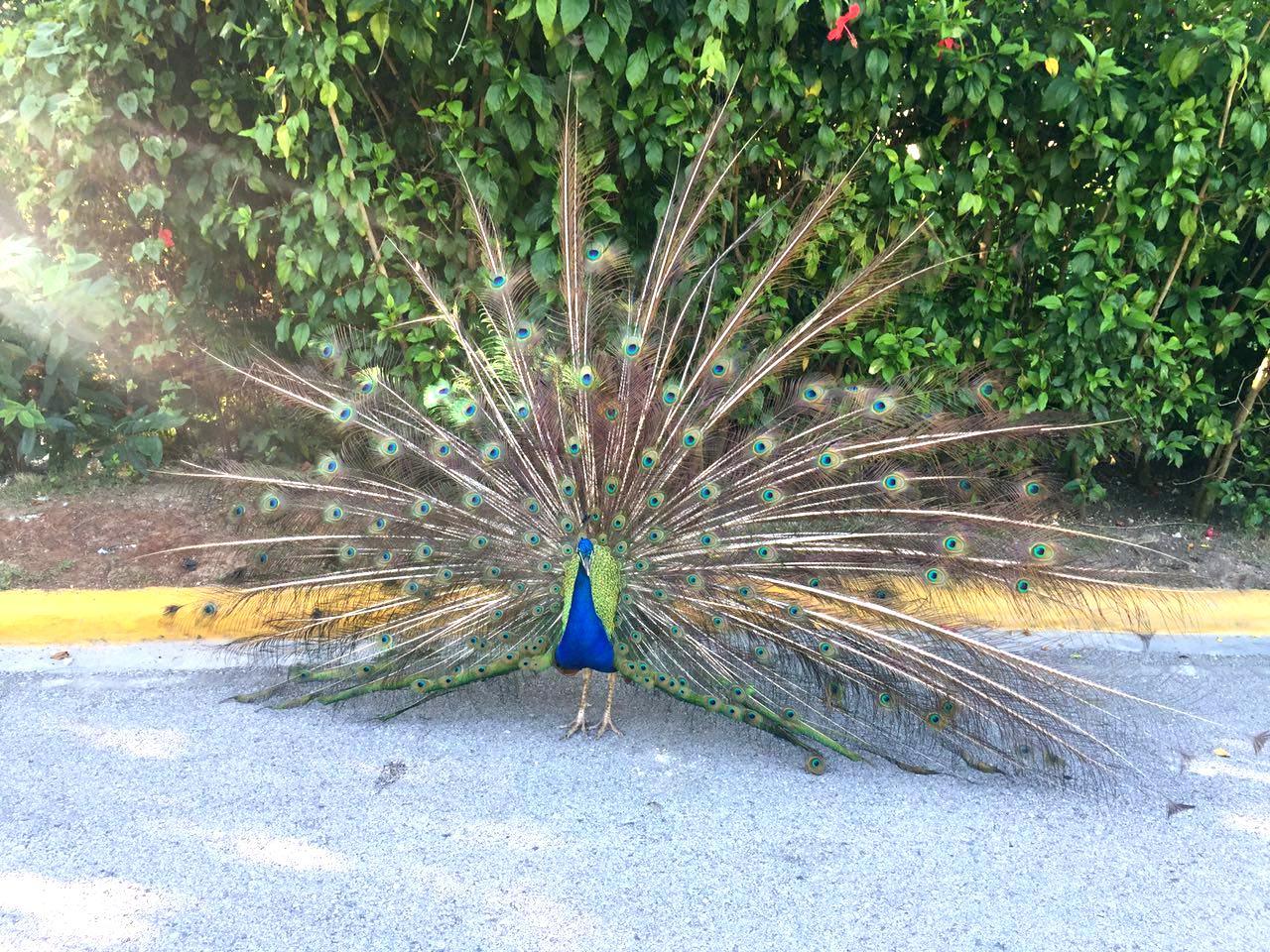 Карибское море и вкус жизни на Доминикане